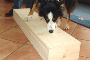 border-collie-meggan-scentbox-02