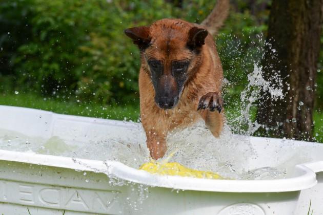 dog-pool-750563-malinois-spielzeug