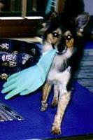 gino-handschuh