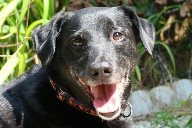 hund-gesicht-lachend-dog-80077_1200