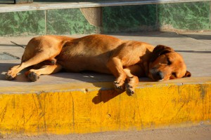 hund-schlafend-buergersteig