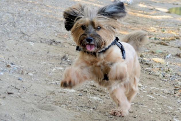hund-spiel-dog-846860_1200