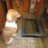 Die Hunde-Backstube