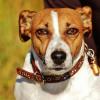 Hundemarken: Schellenbaum am Hundeohr