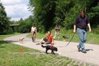 hundestunde-ablenkungsspiel