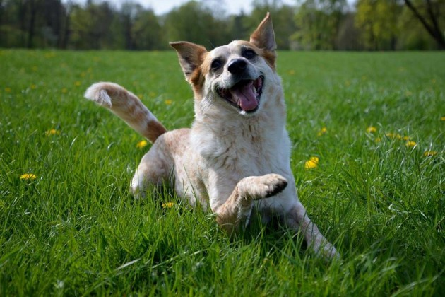 juni-spielen-glücklicher-hund