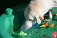 leon-pool-leckerchen-angeln