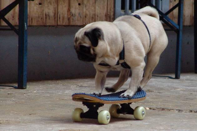 mops-pia-skateboard