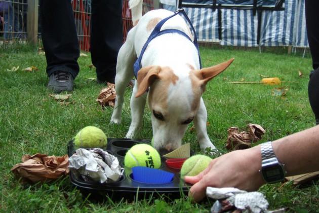muffinform-spiel-terrier