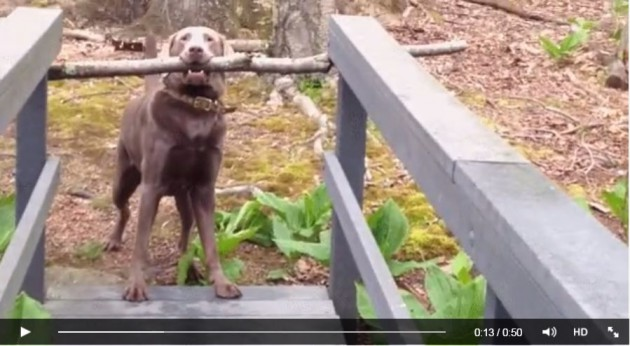 problemlösen-hund-stock