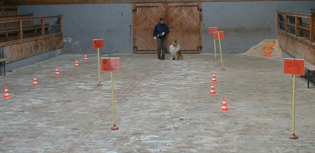 rally-obedience-parcours-halle-01