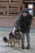 schaeferhund-nessy-drehung-01