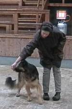 schaeferhund-nessy-drehung-02