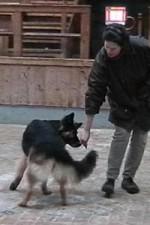 schaeferhund-nessy-drehung-04