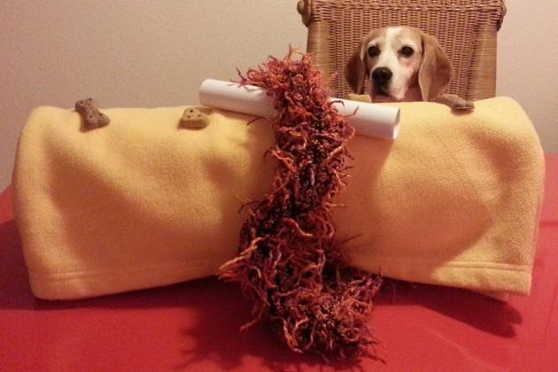 schnüffeldecke-beagle-birte