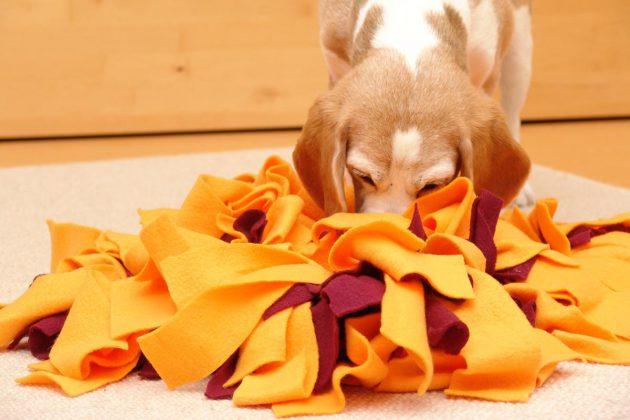 schnueffelteppich-beagle-birte