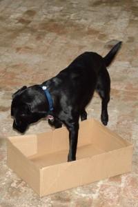 schwarzer-hund-karton-02