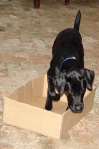 schwarzer-hund-karton-03