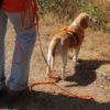 Online: Schöner spazierengehen – Tipps und Ideen für Menschen mit Hund
