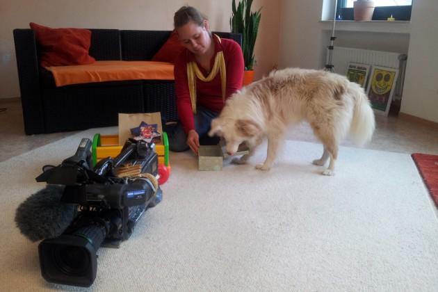 tieresucheneinzuhause-weihnachten-02
