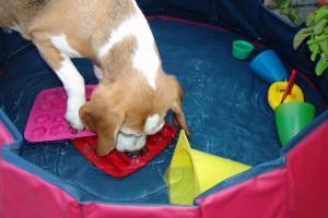wasserspiele-schiffahoi-beagle-birte-02