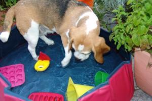 wasserspiele-schiffahoi-beagle-birte-03