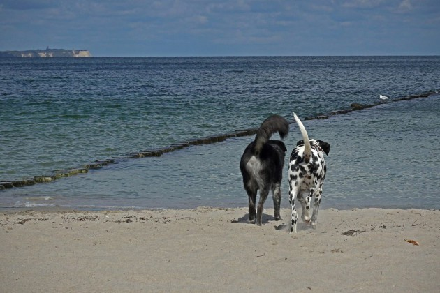 zwei-hunde-strand